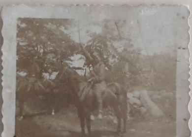 Медянников(Медянов) И.Н, 2-й Украинский фронт, 25.05.1945г